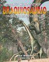 BRAQUIOSARUIO DE PATAS LARGAS